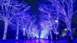 代々木公園ケヤキ並木 青の洞の点灯時 thumbnail