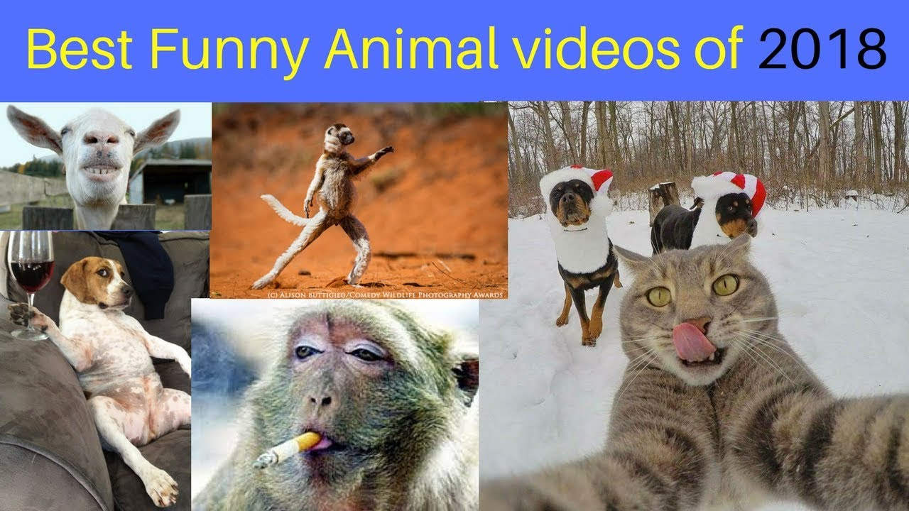 Fawcett funny animals by Trending Page