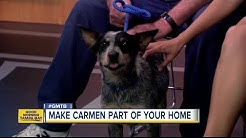 July 30 Rescues in Action: Make Carmen a new member of your family
