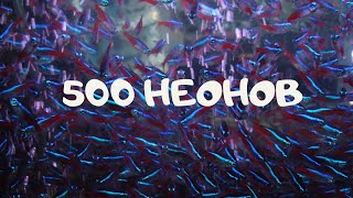 Неон голубой взрослый 500 штук