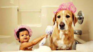 Собаки играют с младенцами. Сборник [NEW HD]