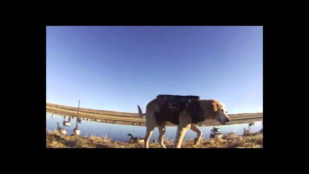 High plains wingshooters se wyoming guided goose hunting for Wyoming out of state fishing license