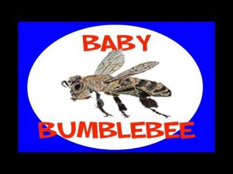 Bringing Home a Baby Bumblebee - Dr. Jean