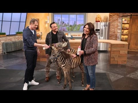You Have to Hear This Wild Story Rachael Ray Has About Her Honeymoon in Africa + Zebras!