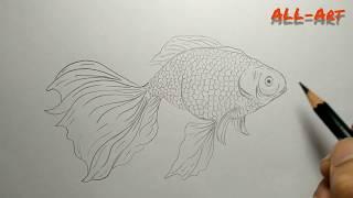 #goldfish# Drawing a goldfish (MENGGAMBAR IKAN MAS KOKI)