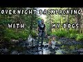 Overnight Backpacking With My Dogs