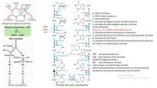 síntesis de novo purinas biochemistry bioquímica