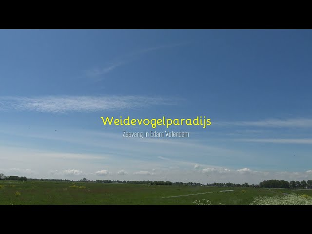 Weidevogelparadijs Zeevang aan het IJsselmeer