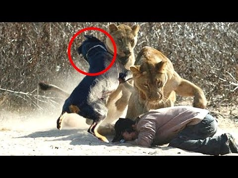 10 Wild Animals That Saved Human Lives