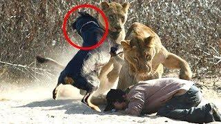 10 Wild Animals That Saved Human Lives