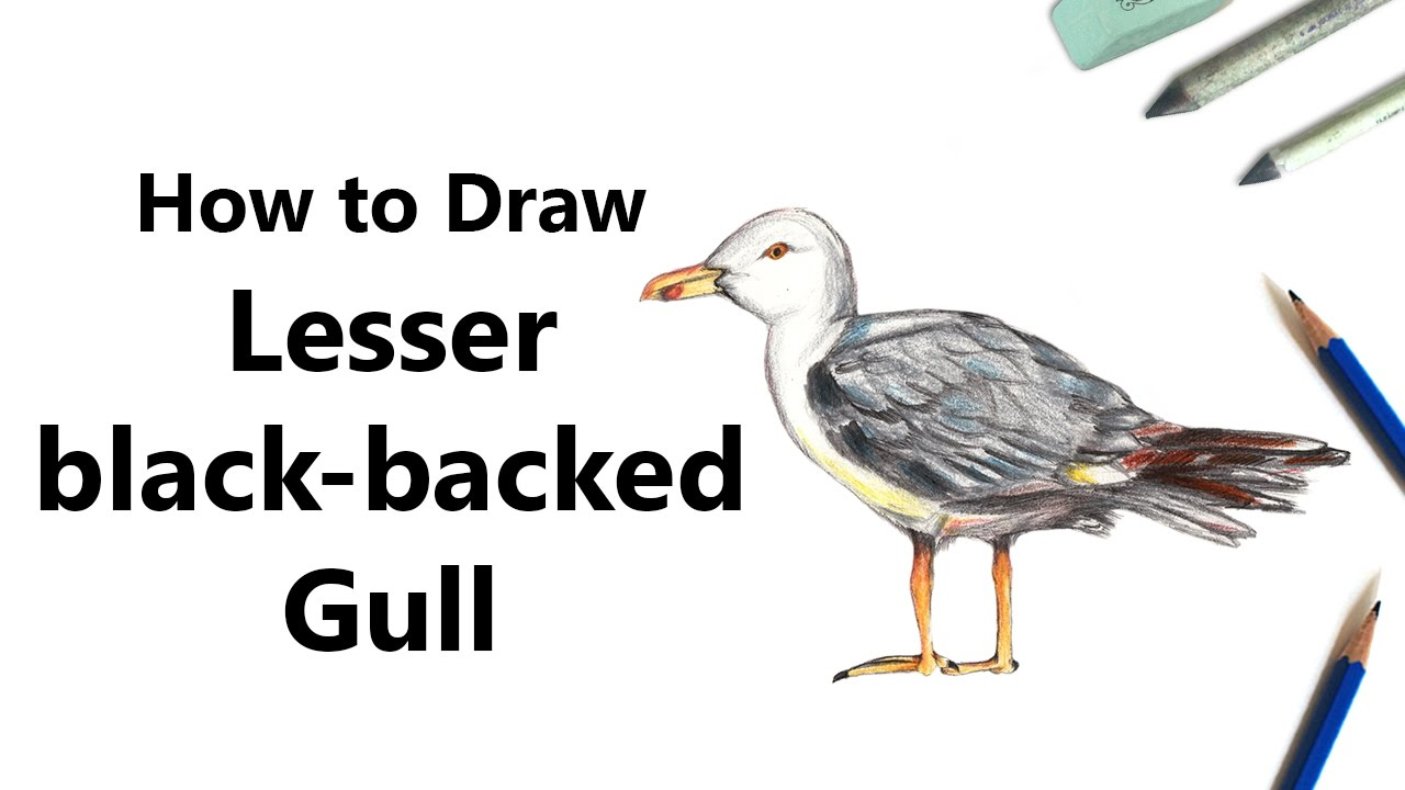 Drawing A Komodo Dragon How To Draw A Lesser Blackbacked Gull With Color  Pencils [time Lapse]
