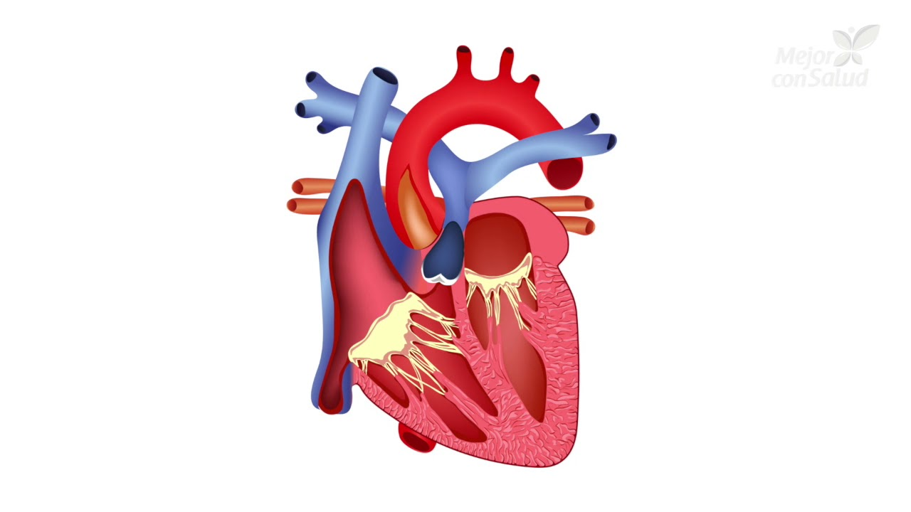 ¿Qué es una arritmia cardíaca y cómo se maneja? - Mejor con salud
