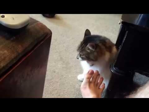 Katie cat show 125