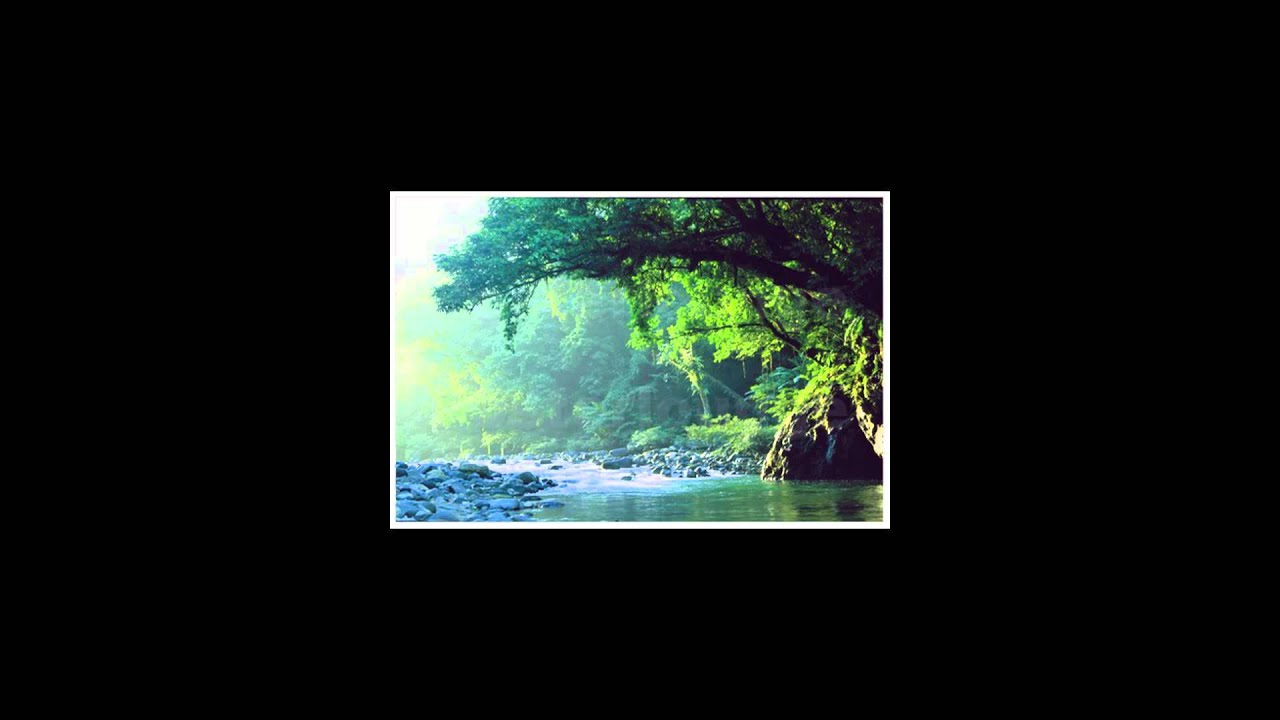 Into The Rainforest Relaxing Music With Nature Sounds