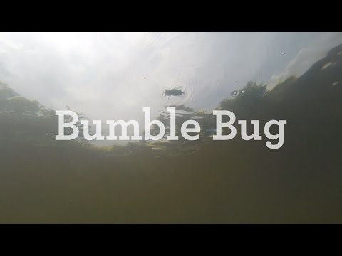 Rebel Bumble Bug How To