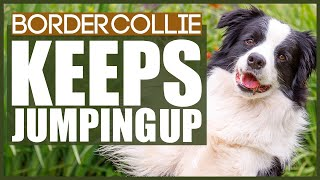 PUPPY TRAINING! How To Stop Your BORDER COLLIE From Jumping Up!