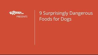 9 Dangerous Foods - Rover.com