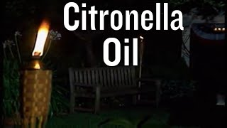 How to Use Citronella Oil