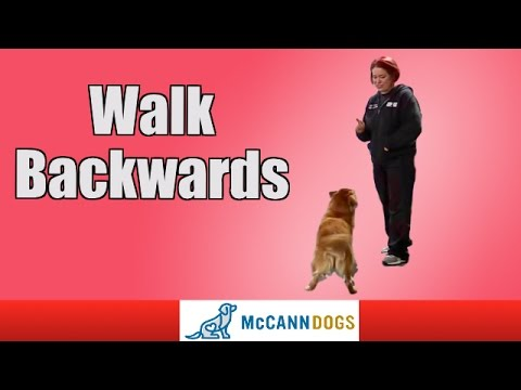 Dog Tricks: Walk Backwards On Command