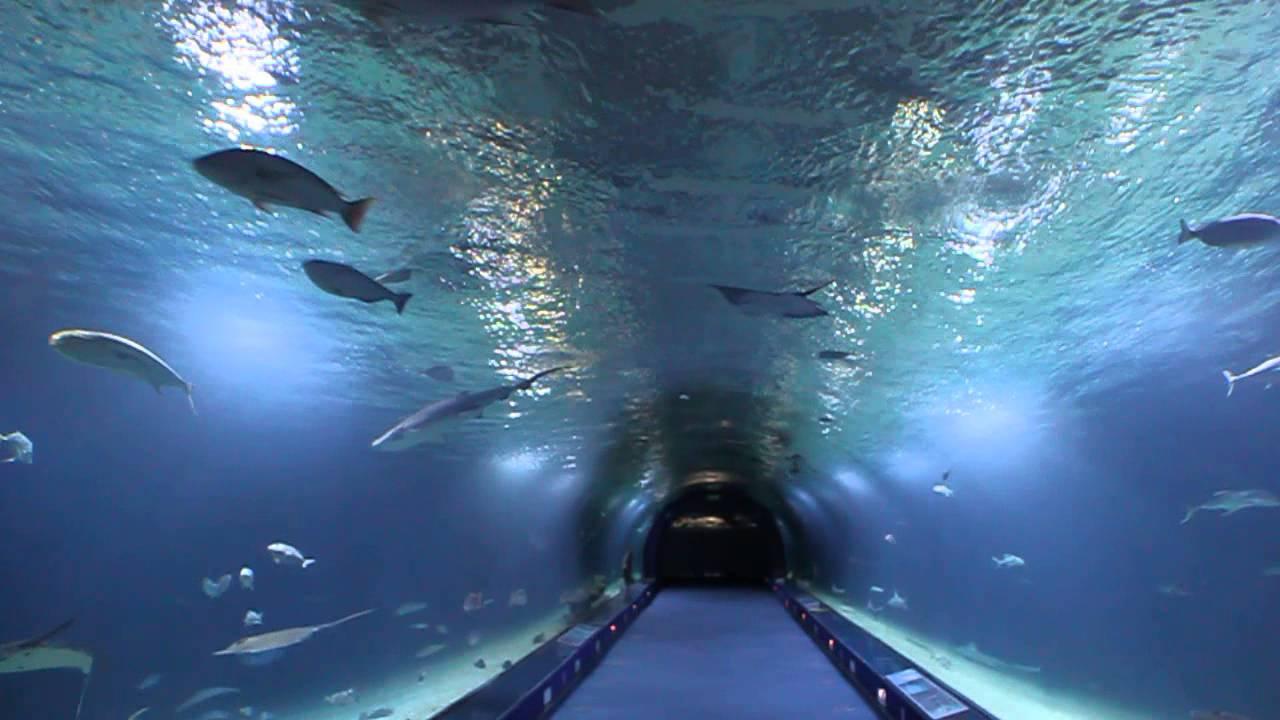 Household Aquarium