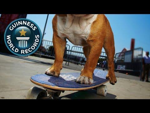 hqdefault tillman the skateboarding bulldog know your meme
