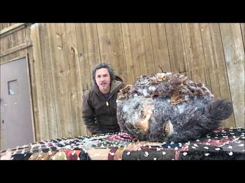 Bigfoot Head, Frozen since 1953 only Proof in Existence of Sasquatch