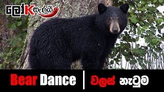 Bear dance - වලස් නැටුම