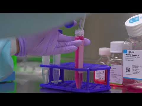 Freezing Cells: Cell Culture Basics