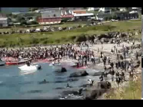 Killing of 450 pilot whales ( how awful! )