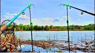 Весенние КАРАСИ на ПРУЖИНУ и ФИДЕР Рыбалка на донки на карася