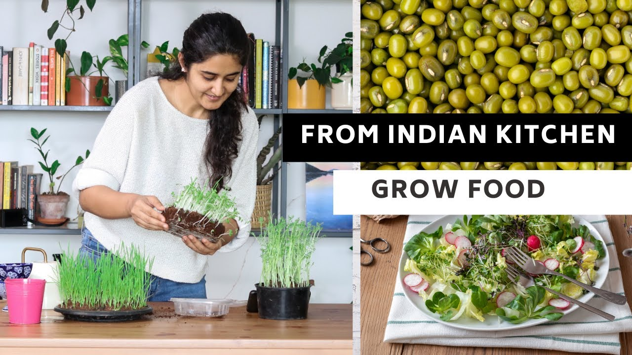 Microgreens from Indian Kitchen | You can grow