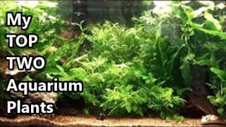 Best Live Plants For Tropical Aquariums - My Top Two