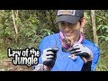 Ong Seong Wu Doesn't Hesitate! He is not Scared at all! [Law of the Jungle Ep 327]