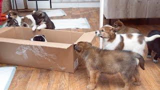 Это должен смотреть каждый Как и где спасают животных волонтёры России protect animals in Russia