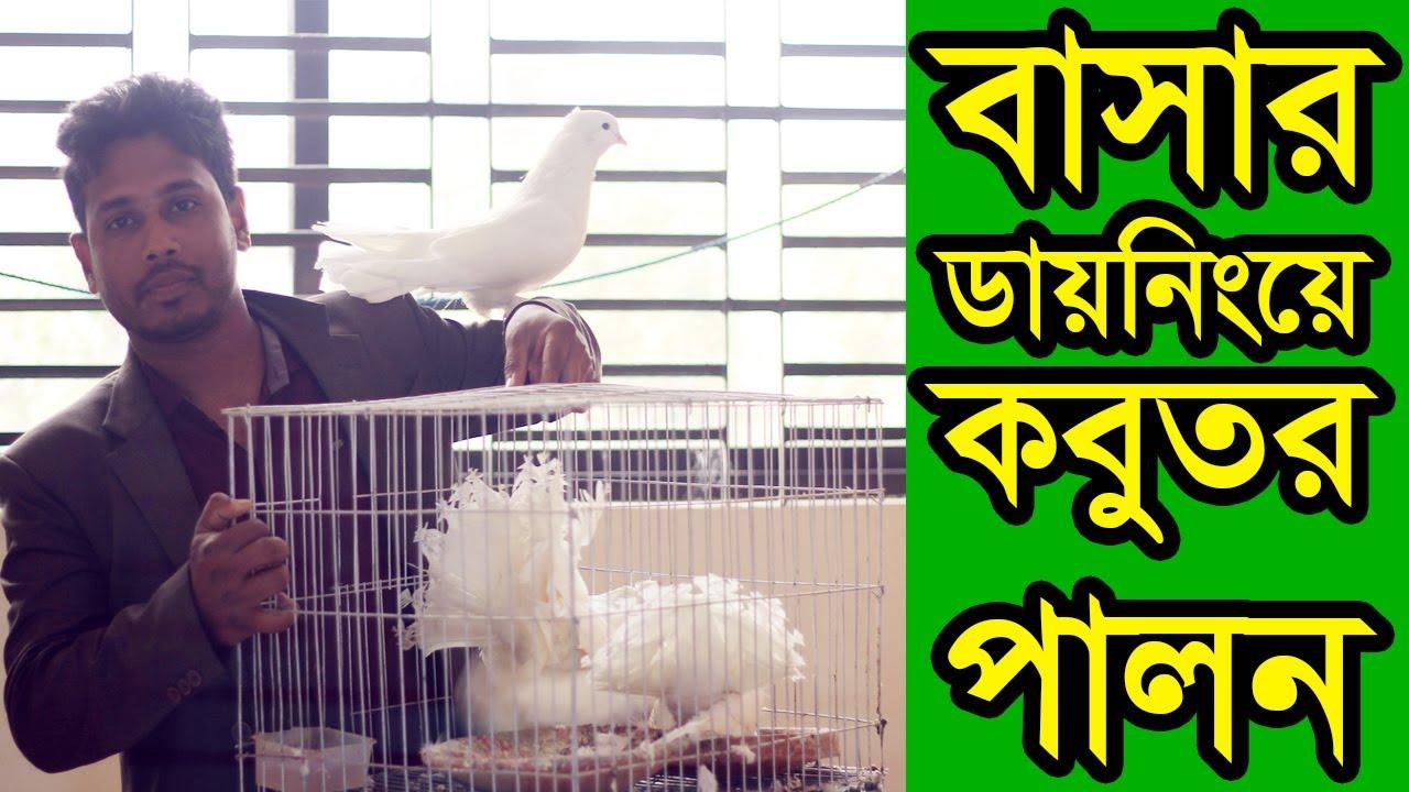 বাসার ডায়নিংয়ে যেভাবে আমি খাঁচায় কবুতর পালন করছি   ভালবাসার লক্ষা কবুতর   Pigeon Farming in Cages