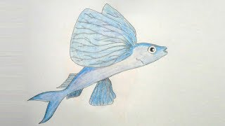 How to draw fling Fish step by step ||very easy||