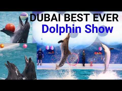 Dubai Best Ever Dolphin Show   Dubai Dolphinarium   Dolphin Show