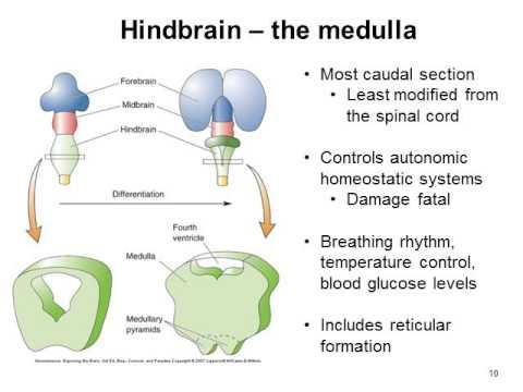 PHA10014 PHA10016 Human nervous system 2015 2016