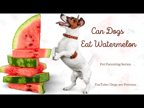 can-dogs-eat-watermelon-👉-is-watermelon-safe-for-dogs-check-it-out!