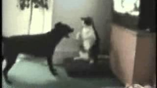 Кошка против Собаки!!!