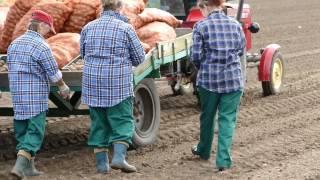 Video Polska hodowla ziemniaka download MP3, 3GP, MP4, WEBM, AVI, FLV November 2017