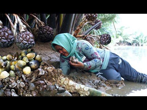 Jarang Terjamah Manusia,Kerang Di Muara Sungai Ini Sangat Melimpah