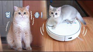 [협찬]로봇청소기를 처음 본 쫄보 고양이와 용맹한 새끼…