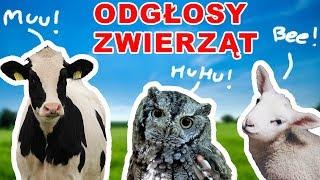 Nauka zwierząt dla dzieci po polsku - Odgłosy Zwierząt - Zwierzęta dla dzieci