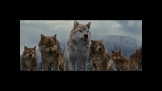 Twilight Wolves Scenes