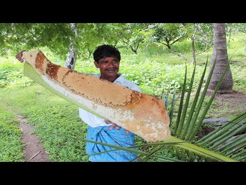 Harvesting honey from