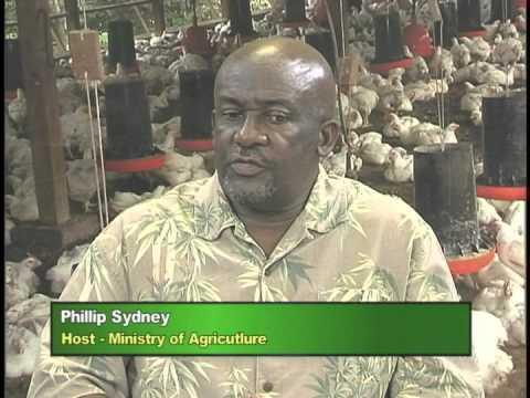 Agriculture on the move: Black Sigatoka Unit