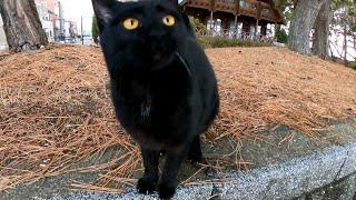 木の陰から黒猫がモフられにきた