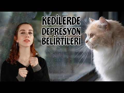 Kedilerde Sık Görülen Depresyon Belirtileri