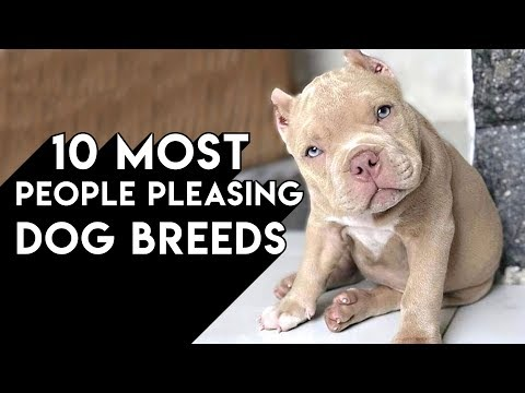 10 Most People Pleasing Dog Breeds